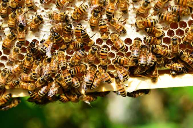 honeycomb insect bees honey